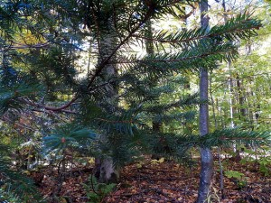 100_4746-Honeoye-Falls-Fall-2014_sm