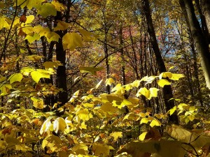 100_4756-Honeoye-Lake-Fall-2014_sm