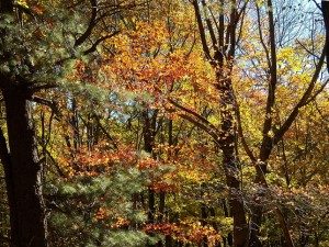 100_4762-Honeoye-Lake-Fall-2014_sm