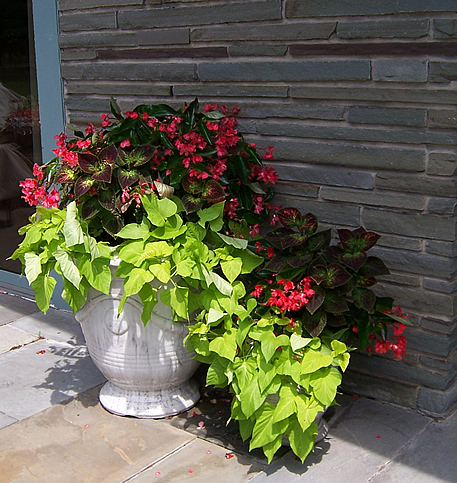 Urns with begonias