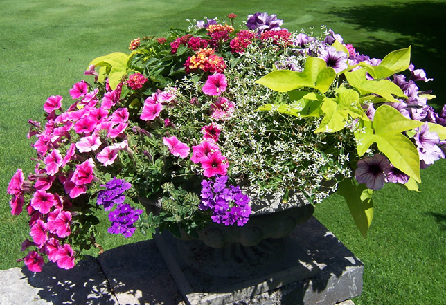 Low urn with mixed flowers