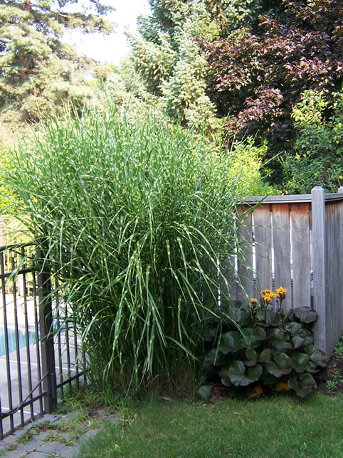 grasses and such the garden worm blog. Black Bedroom Furniture Sets. Home Design Ideas