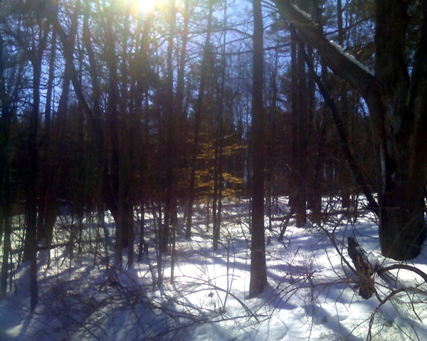 Mendon Ponds in winter
