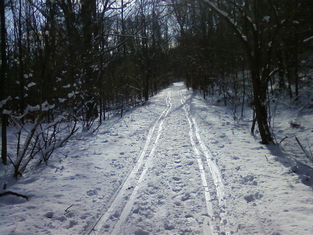 Long ski run through the woods