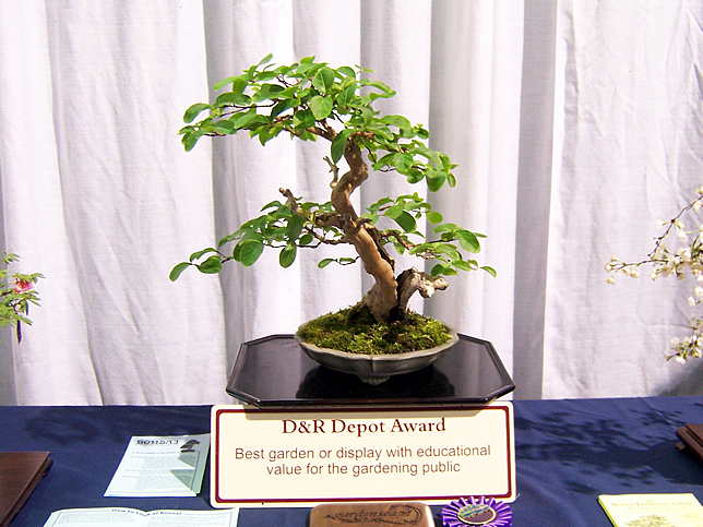 Bonsai specimen