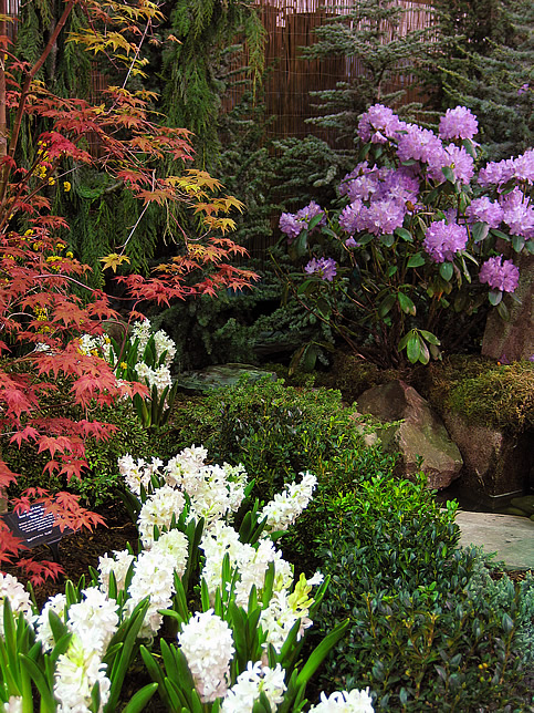 Jap maple, rhody, and hyacinth